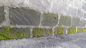 Стена мха Стоковые Фото