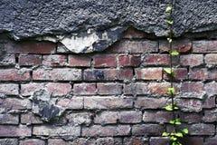 стена предпосылки старая Предпосылка Grunge backhander стоковая фотография