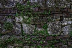 Стена предпосылки большого камня с зелеными цветами Стоковая Фотография