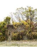 Стена развязности Стоковые Фото
