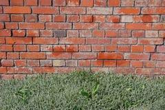 стена сада кирпича красный цвет предпосылки зеленый Старое facture кирпичей Стоковые Фотографии RF