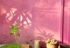 стена самана Стоковая Фотография