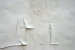стена самана Стоковое Фото