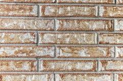 стена сада фронта цветка кирпича коричневая Стоковая Фотография
