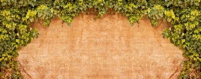 стена сбора винограда плюща Стоковые Изображения RF