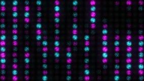 Стена сине-Розы света накаляет с влиянием дождя видеоматериал