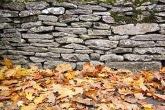 стена сухих листьев предпосылки осени каменная Стоковое фото RF