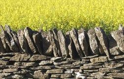стена сухого rapeseed масла поля каменная Стоковая Фотография RF