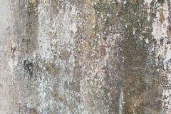 Стена с зеленой прессформой и грязь на поверхности стоковое фото