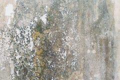 Стена с зеленой прессформой и грязь на поверхности стоковая фотография