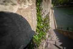Стена с зелеными растениями Стоковые Фотографии RF