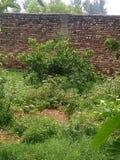 Стена с зеленой травой Стоковое Изображение