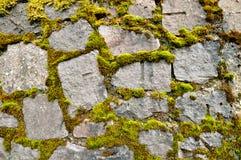 Стена с зеленым-broun мхом Стоковая Фотография RF