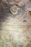 Стена с ископаемым на саде бабочки Стоковое Изображение