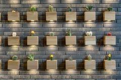 Стена с кактусами Стоковые Изображения RF