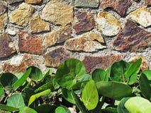 Стена с контрастами Стоковая Фотография RF