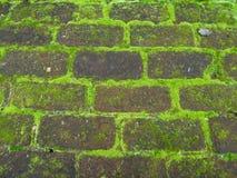 Стена с мхом Стоковое Фото