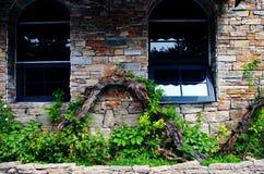Стена с лозами Стоковое Изображение