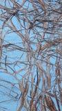 Стена с трассировками rootwood Стоковое фото RF