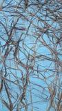 Стена с трассировками rootwood Стоковое Фото