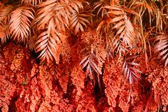 Стена с тропическими заводами Предпосылка природы красная стоковая фотография rf