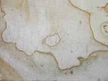 стена текстуры завода предпосылки малая стоковая фотография rf