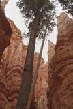 стена улицы каньона bryce стоковое изображение