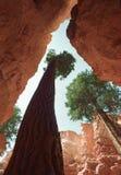 стена улицы каньона bryce Стоковые Изображения