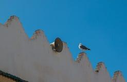 Стена, усилитель и чайка Стоковые Фото