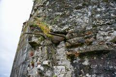 Стена форта Lesendro, Черногории Стоковые Изображения RF