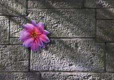 стена цветка растущая каменная Стоковое Фото