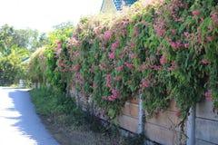 Стена цветка Стоковое Изображение