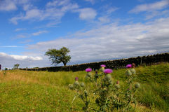 стена цветка hadrian s Стоковые Изображения RF