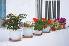 стена цветков Стоковое Фото