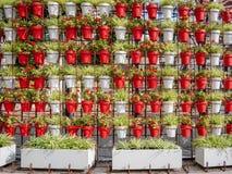 Стена цветочных горшков в парке Много стоковые фотографии rf