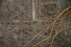 Стена цемента с корнями дерева Стоковое Изображение