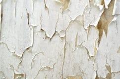стена шелушения Стоковые Фотографии RF