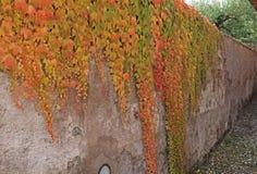 Стена Coulored Стоковые Фото