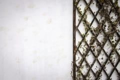 Стена Grunge белая с заводами стоковое изображение