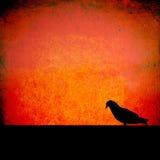 стена grunge птицы стоковая фотография rf