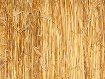 стена thatch стоковые изображения rf