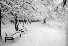 2 стенда снега стоковые фотографии rf