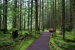 Стенд в волшебном лесе Стоковые Фото