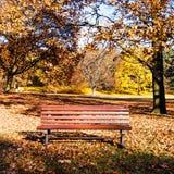 Стенд в парке в осени Стоковые Фото