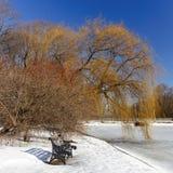 Стенд литого железа, красная рябина, плача верба в парке города на предпосылке голубого безоблачного неба Стоковые Фото