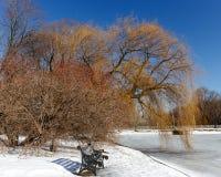 Стенд литого железа, красная рябина, плача верба в парке города на предпосылке голубого безоблачного неба Стоковое Изображение