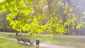 Стенд под деревом в парке акции видеоматериалы