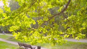Стенд под деревом в парке сток-видео