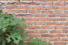 Стены Брайна Стоковые Фотографии RF