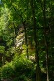 Стены каньона через деревья стоковые изображения rf